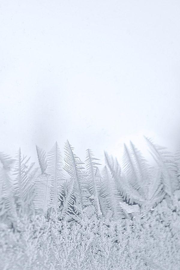 Winter Window Frost